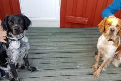 Brut og Noah, søsken