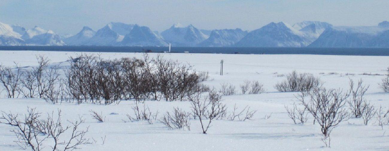Kennel Rypkleppen i NM Vinter på Andøya
