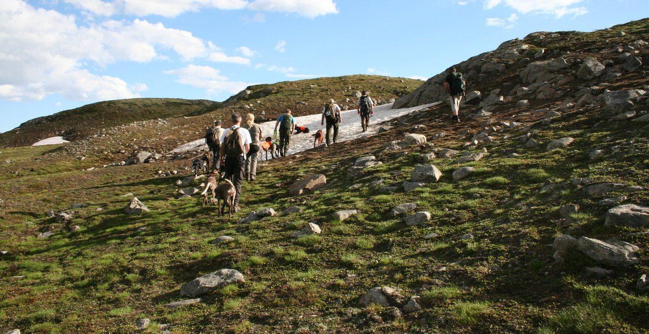 To Rypkleppen-hunder stiller på NM Høyfjell