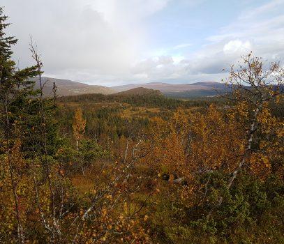 Skogsfugljakta 2019
