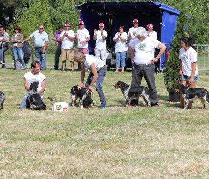Nationale D'Elevage  Aurillac 2014