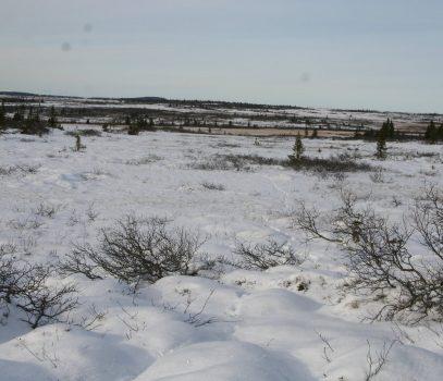 Skogsfugljakta 2009