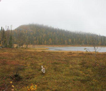 Skogsfugljakta 2012